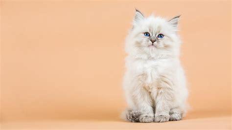 un gato y un 0735818355 d 237 a del gato por qu 233 nos enamoran los gatos