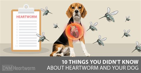 I Didnt Even Er Pet Pet Pet Product 6 by 10 Things You Didn T About Heartworm Dogs Naturally