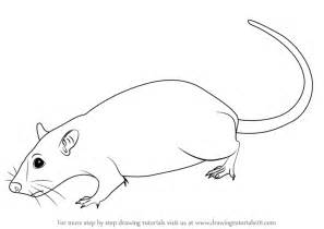 Draw A Learn How To Draw A Rat Rodents Step By Step Drawing