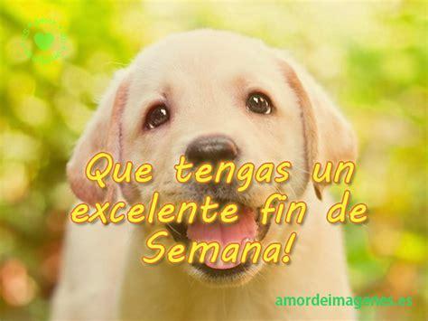 imagenes alegres fin de semana im 193 genes de perritos bellos perros con frases de amor