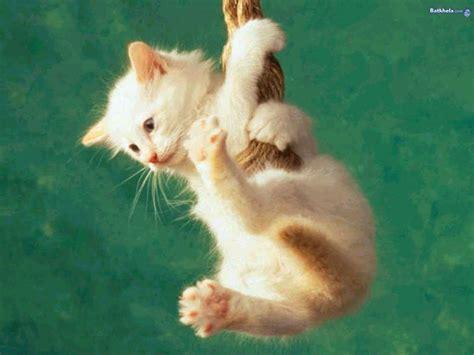 images cats cat cats wallpaper 12928457 fanpop