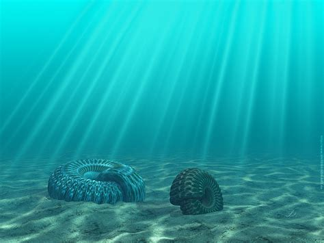 The Bottoms sea bottom wallpapers sea bottom stock photos