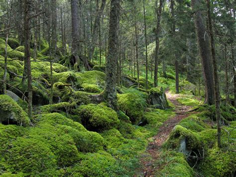 sterling forest trees great smoky mountains national park national park in