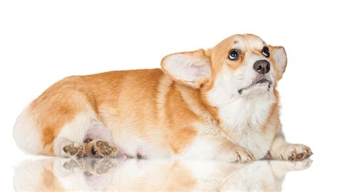 hives in dogs hives defining treating and preventing hives