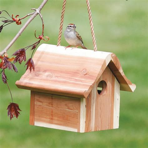 where to hang a wren bird house birdcage design ideas