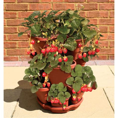 strawberry pot a must have for my ever growing strawberry plant love it pinterest
