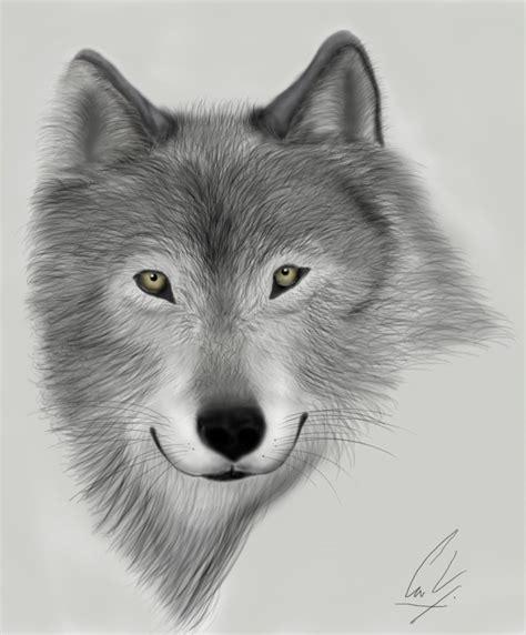 imagenes a lapiz de lobos lobo a lapiz imagui