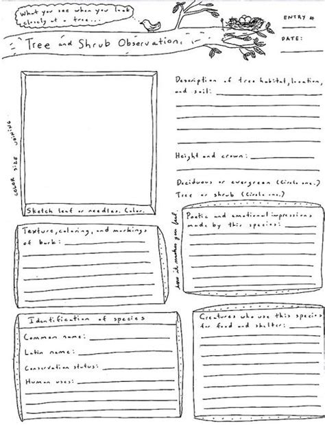 printable observation journal 159 best images about nature journal nature study on