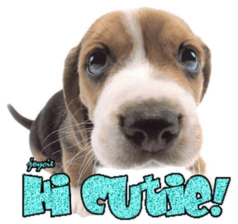 hi puppy hi cutie punjabigraphics