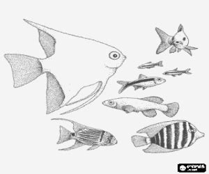 different fish coloring page fishes coloring pages printable games