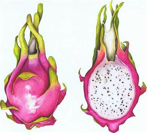 fruit drawings of fruit drawings clipart best
