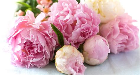 Flower Decorating Tips How To Grow Stunning Peonies Better Homes And Gardens