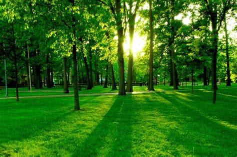 imagenes deareas verdes el cuidado de las 225 reas verdes