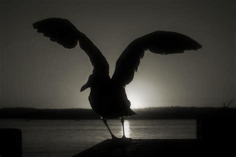 imagenes artisticas blanco y negro a color y en blanco y negro taringa