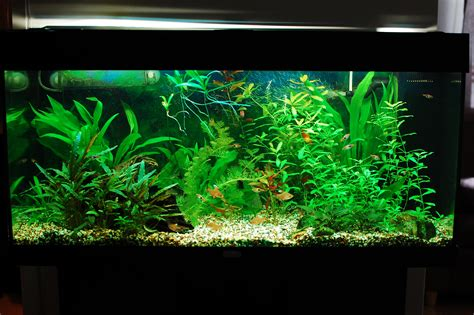 plants for tropical fish tanks plants freshwater aquarium talk