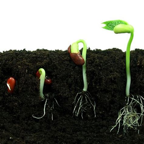 Organic Garden Soil by Supercharge Your Soil For Organic Gardening