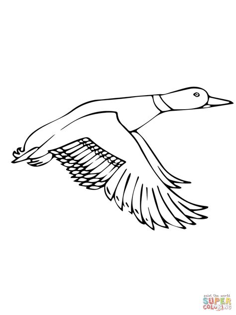 flying mallard duck coloring page free printable