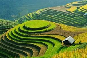 Bench Terracing Terraced Rice Fields In Sapa Vietnam