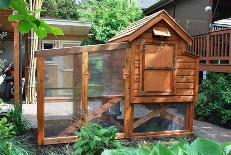 city coop backyard chickens community