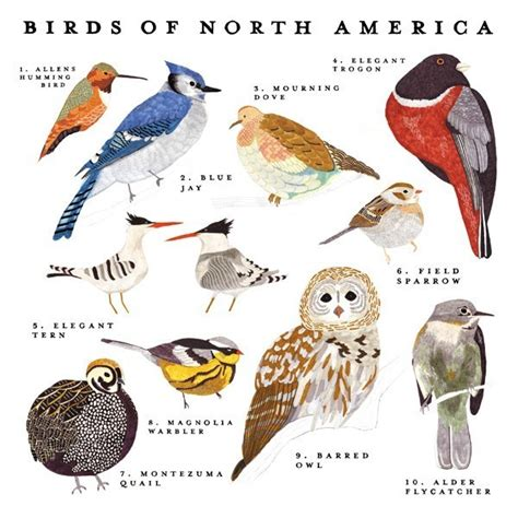 Backyard Birds Of America by Birds Of America Search Engine At Search