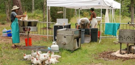 backyard chicken processing backyard chicken processing 28 images poultry