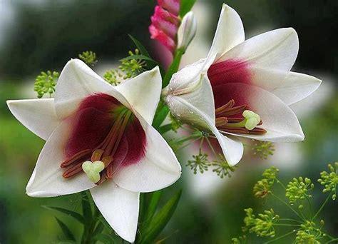 imagenes bellas hermosas y preciosas bienvenido octubre con preciosas flores plantas