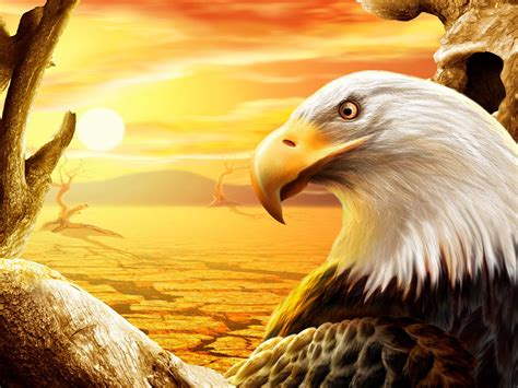 cool eagle wallpaper awesome sunset and cool eagle image