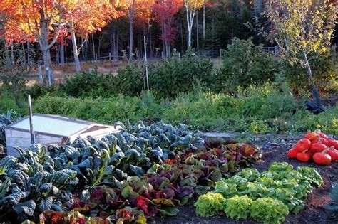 Winter Vegetable Gardens Fall Vegetable Garden Bob Vila