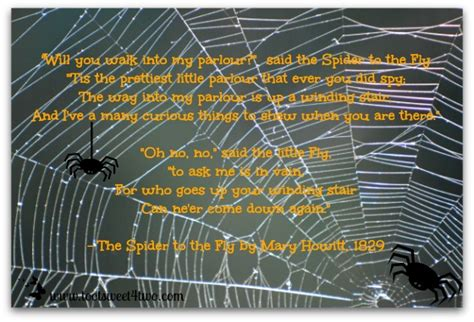 the spider and the fly a writer a murderer and a story of obsession books the spider and the fly toot sweet 4 two