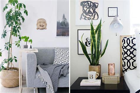 plante de chambre quelle plante mettre dans chaque pi 232 ce de la maison