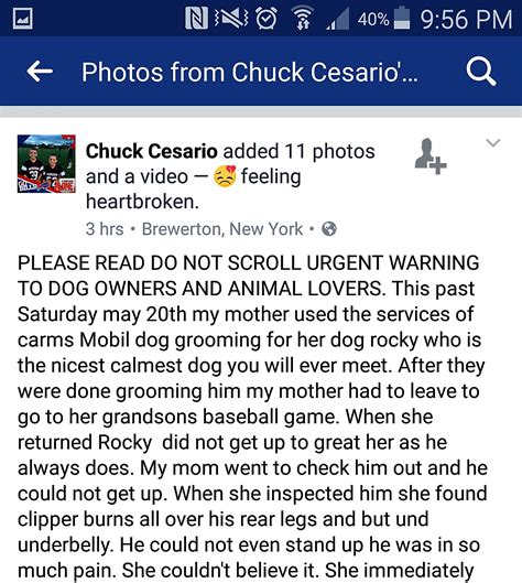 carms dog house syracuse groomer accused on facebook of breaking dog s leg not so fast there s video
