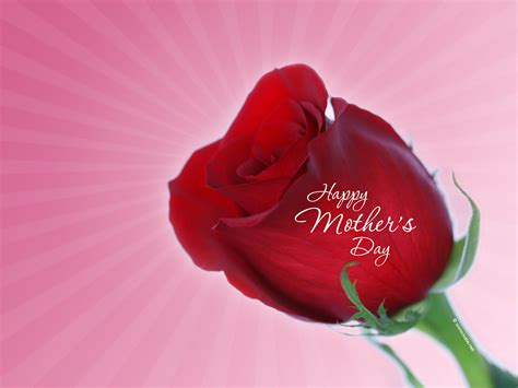 tulips net kate mother s day wallpapers printable mother s day cards by