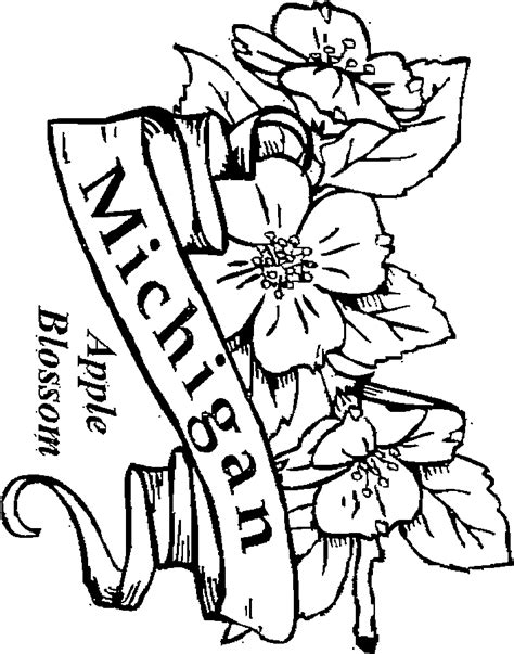 s hopkins apple blossom coloring page coloring pages