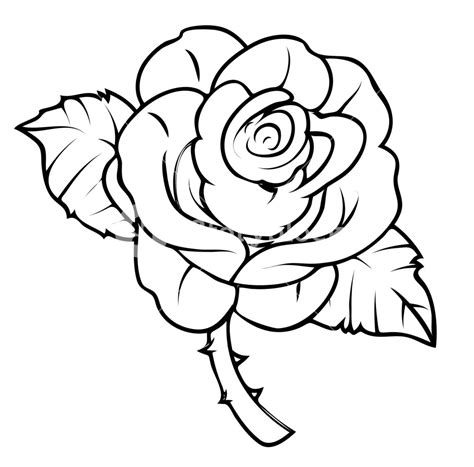 coloring pages more images roses 12 rose drawing royalty free stock image storyblocks