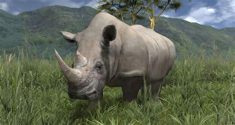 imagenes de animales la selva informacion e imagenes de animales de la selva info
