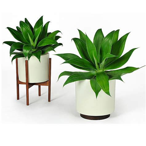 two plants in modern wooden pots plant pots pinterest top3 by design modernica modernica cs cylinder wood