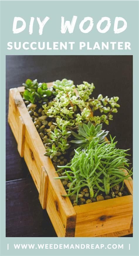 succulent planter diy for under 10 weed em reap succulent planter diy for under 10 weed em reap