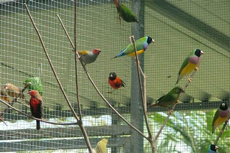 backyard bird aviary why an outdoor aviary will make your backyard famous