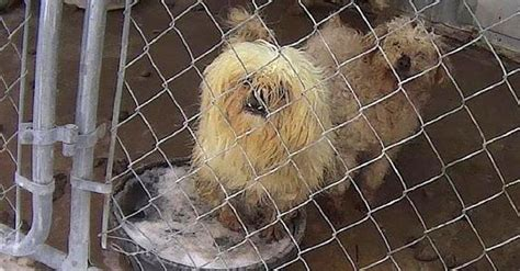 list of puppy mills in iowa 589 best animal rights images on