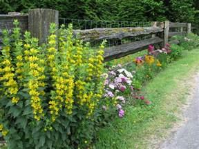 cottage garden plants list