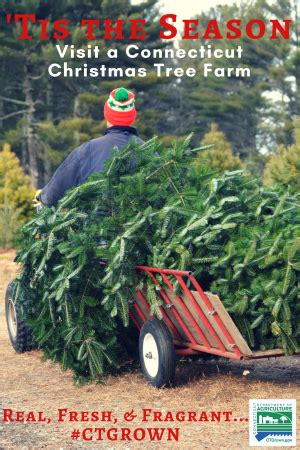 christmastree farms goodforkids ct connecticut grown tree farms opening this week statewide