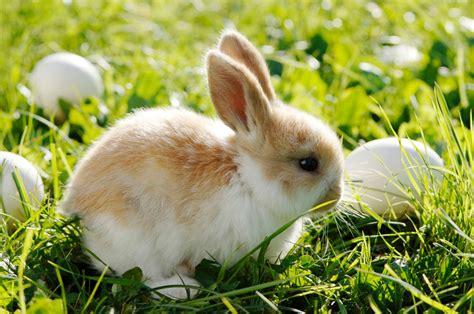 cutest easter bunnies  image  abc news