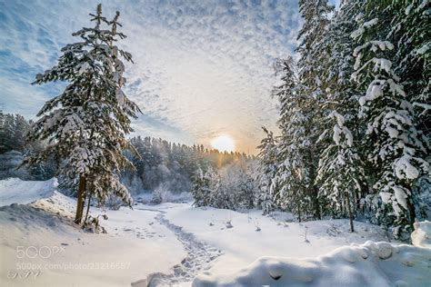 Focal Wall by Photograph Winter In Siberia By Pavel Stasenko On 500px