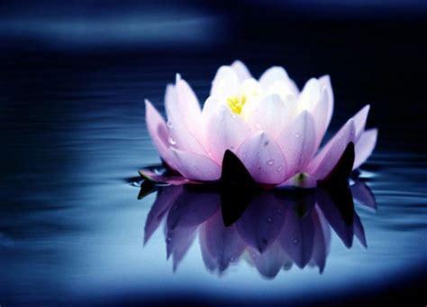 associazione fior di loto un fior di loto contro la violenza sulle donne