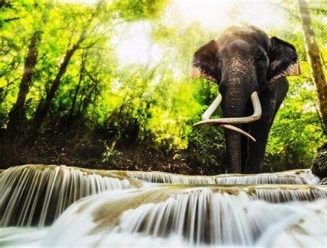 bangkok  amazing tourist places  thailand