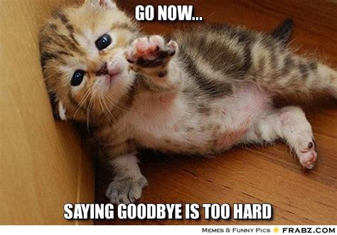 Goodbye Cat Meme - saying so long but not goodbye sandra owens embracing