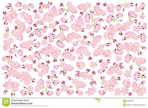pattern wrapper full bloom pink sakura tree cherry blossom isolated on