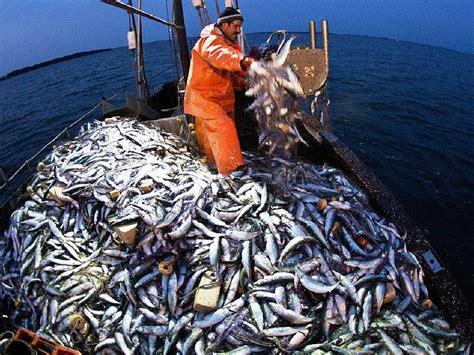 warum haben fische schuppen warum fische in aquakulturen mit wildf 228 ngen gef 252 ttert