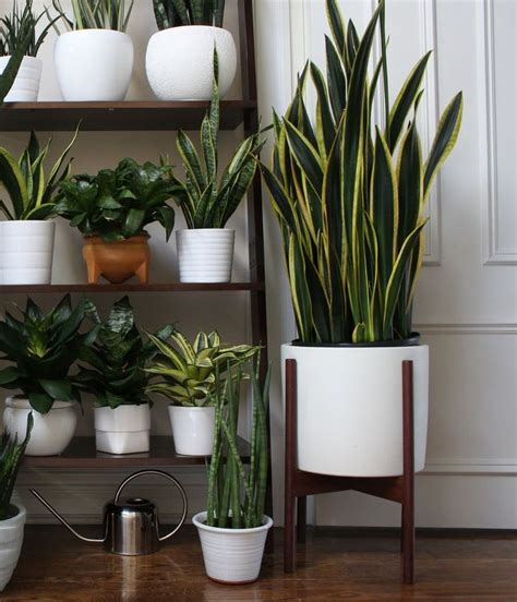planters house best 25 white planters ideas on pinterest zara home