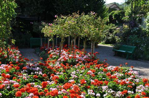 imagenes de jardines con geranios jardines elaborados con geranios diseo y consideraciones